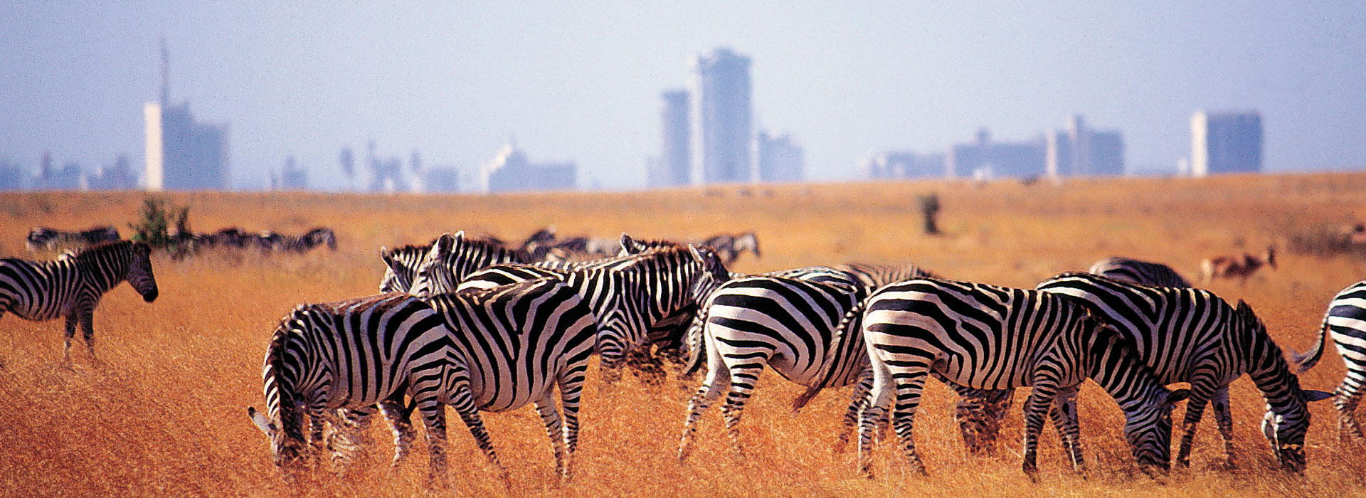 Image result for Nairobi National Park